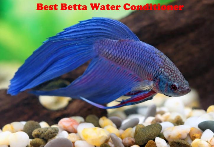 The Best Betta Water Conditioner – (2020 Reviews & Guide)